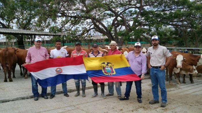 Genética paraguaya genera buenos resultados en Ecuador