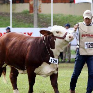 Gracias a Paraguay, Ecuador ya tiene asociación de Braford